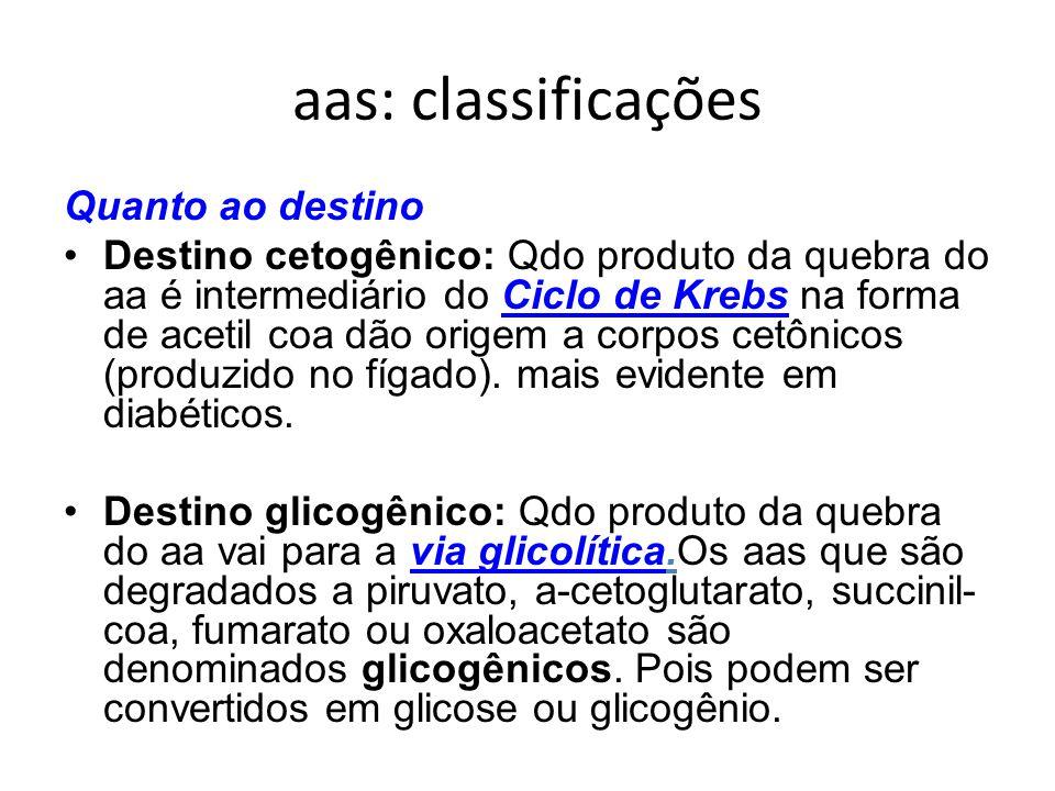 aas: classificações Quanto ao destino Destino cetogênico: Qdo produto da quebra do aa é intermediário do Ciclo de Krebs na forma de acetil coa dão ori