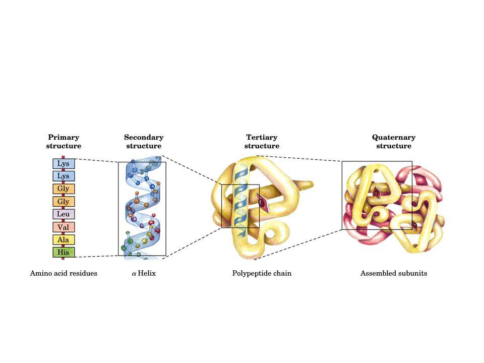 aas essenciais Aminoácidos não-essenciais: Síntese mais simples, o corpo produz.