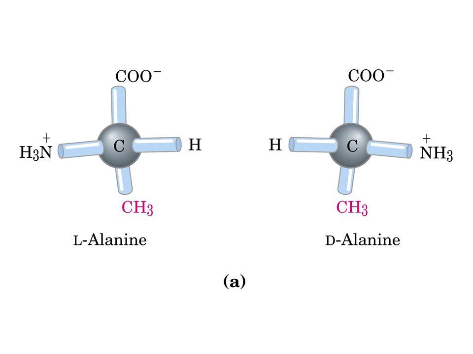 Aminoácidos Possuem partes: NH2 (amina), COOH (carboxila) hidrogênio, carbono alfa (todas partes se ligam a ele), e um radical característico de cada aminoácido.