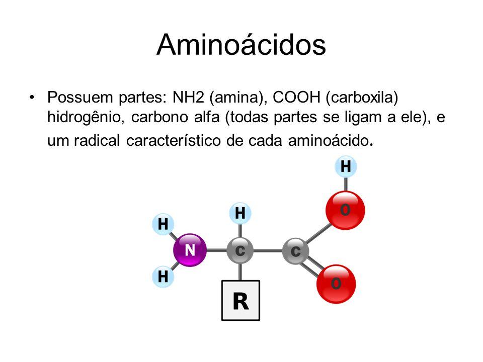 Aminoácidos Possuem partes: NH2 (amina), COOH (carboxila) hidrogênio, carbono alfa (todas partes se ligam a ele), e um radical característico de cada