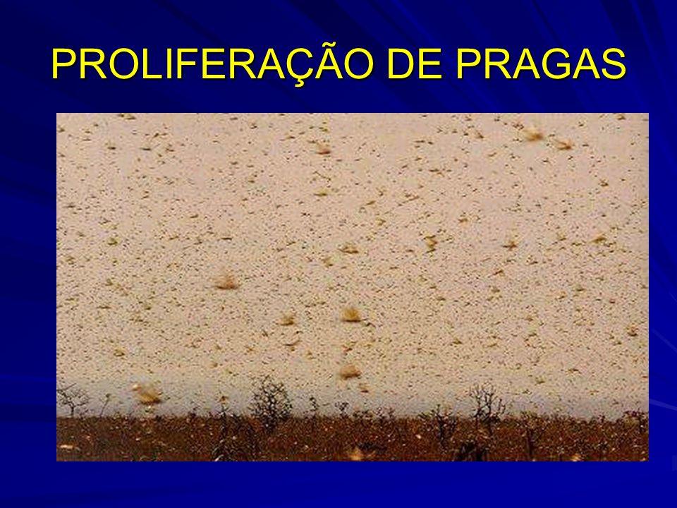 PROLIFERAÇÃO DE PRAGAS