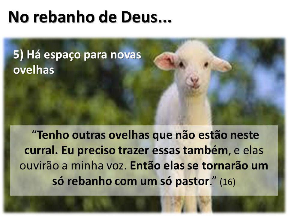 """No rebanho de Deus... """"Tenho outras ovelhas que não estão neste curral. Eu preciso trazer essas também, e elas ouvirão a minha voz. Então elas se torn"""
