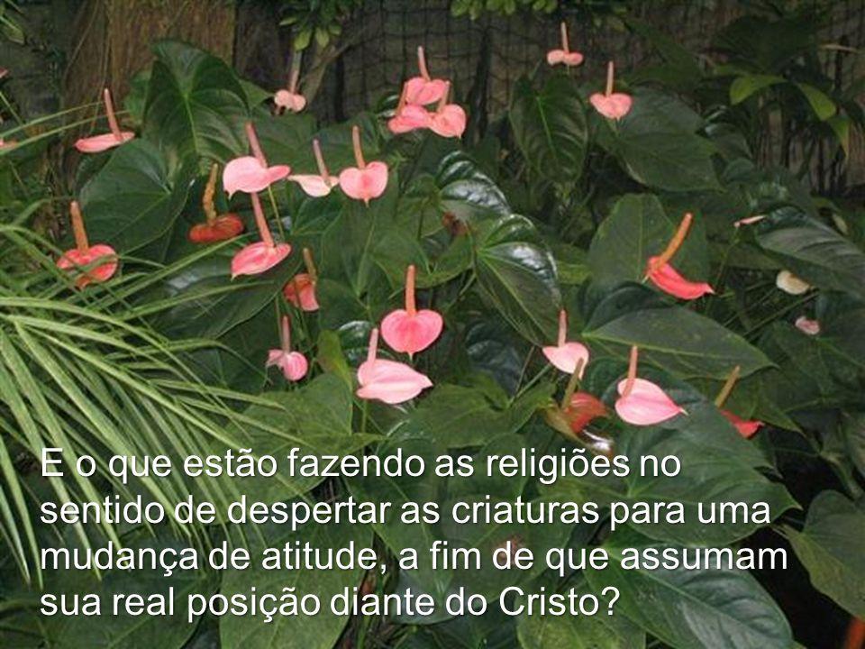 E o que estão fazendo as religiões no sentido de despertar as criaturas para uma mudança de atitude, a fim de que assumam sua real posição diante do Cristo