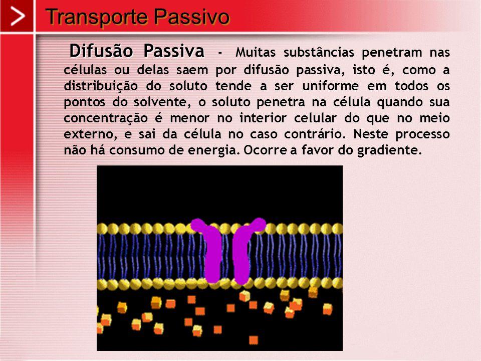 Transporte Passivo Difusão Passiva Difusão Passiva - Muitas substâncias penetram nas células ou delas saem por difusão passiva, isto é, como a distrib
