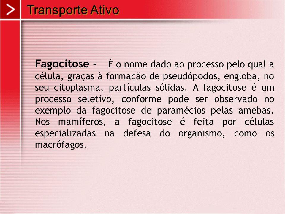 Transporte Ativo Fagocitose - É o nome dado ao processo pelo qual a célula, graças à formação de pseudópodos, engloba, no seu citoplasma, partículas s