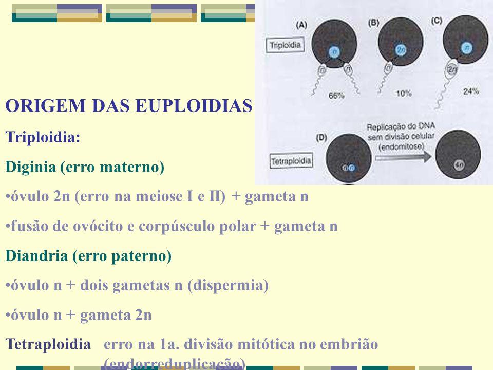 ORIGEM DAS EUPLOIDIAS Triploidia: Diginia (erro materno) óvulo 2n (erro na meiose I e II) + gameta n fusão de ovócito e corpúsculo polar + gameta n Di