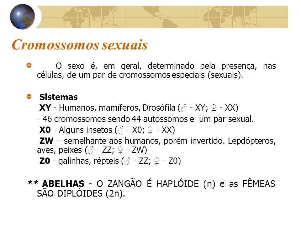 Cromossomos sexuais O sexo é, em geral, determinado pela presença, nas células, de um par de cromossomos especiais (sexuais). Sistemas XY - Humanos, m