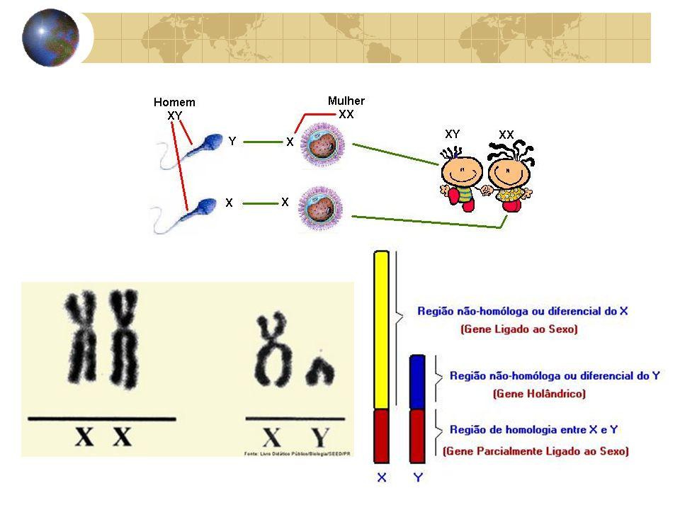 Hermafroditismo e Pseudo-hermafroditismo 1) - Hermafrodita verdadeiro muito raro.