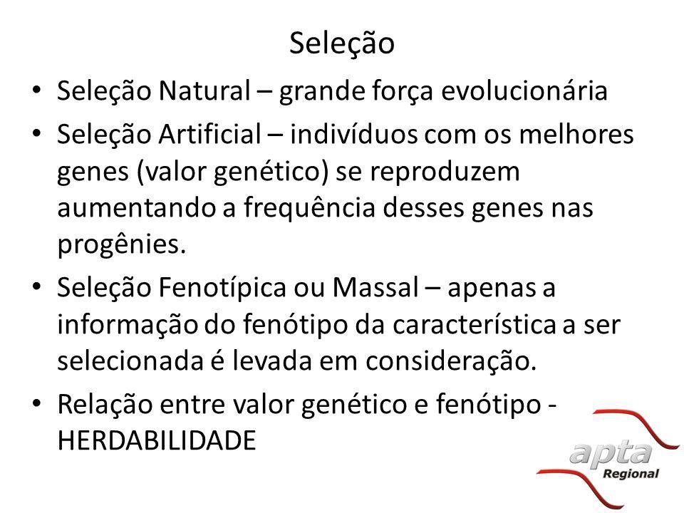Seleção Seleção Natural – grande força evolucionária Seleção Artificial – indivíduos com os melhores genes (valor genético) se reproduzem aumentando a