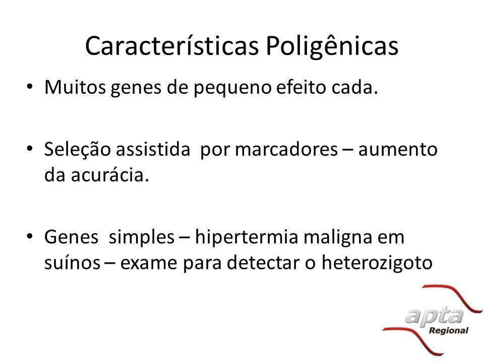 Características Poligênicas Muitos genes de pequeno efeito cada. Seleção assistida por marcadores – aumento da acurácia. Genes simples – hipertermia m