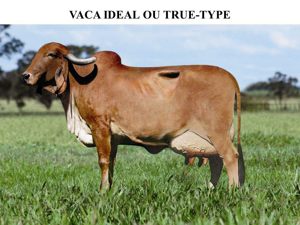 VACA IDEAL OU TRUE-TYPE