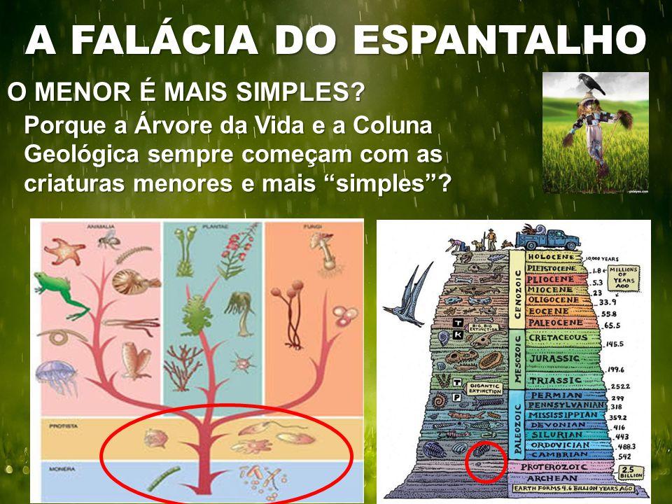 """O MENOR É MAIS SIMPLES? A FALÁCIA DO ESPANTALHO Porque a Árvore da Vida e a Coluna Geológica sempre começam com as criaturas menores e mais """"simples""""?"""