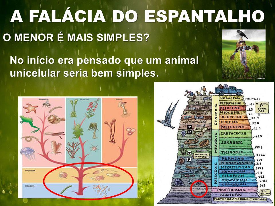 O MENOR É MAIS SIMPLES? A FALÁCIA DO ESPANTALHO No início era pensado que um animal unicelular seria bem simples.
