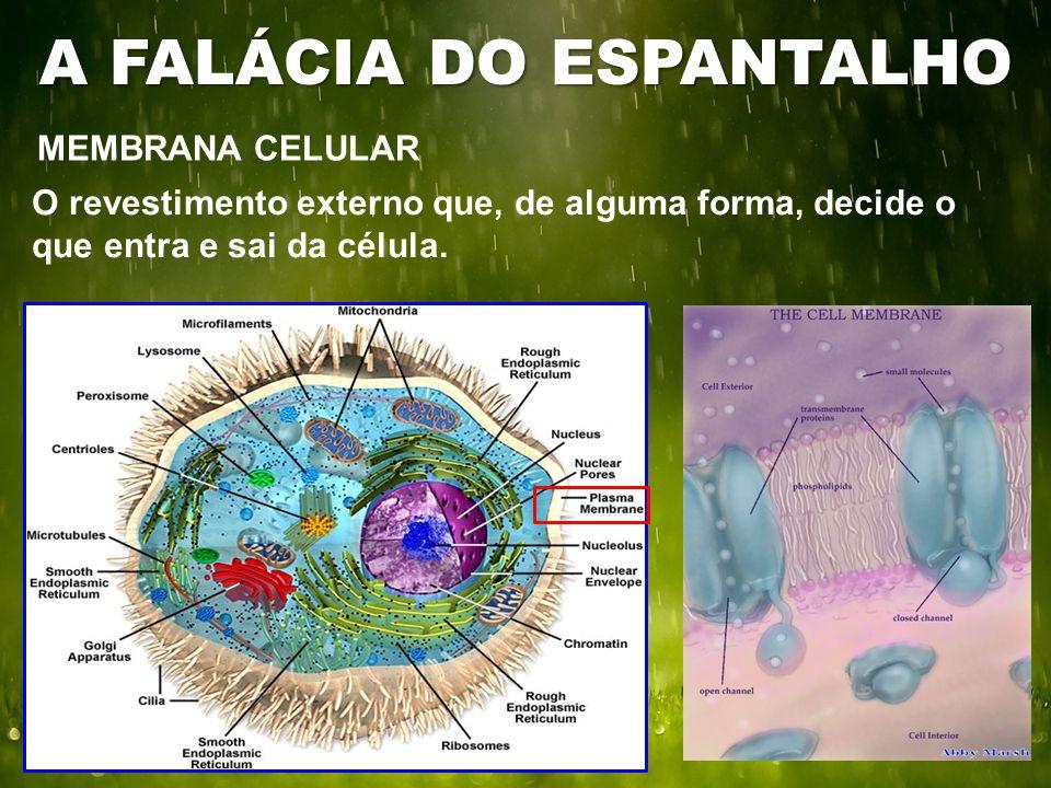 MEMBRANA CELULAR A FALÁCIA DO ESPANTALHO O revestimento externo que, de alguma forma, decide o que entra e sai da célula.