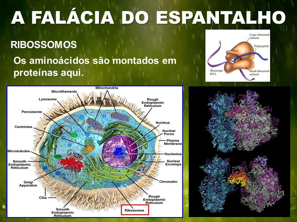 RIBOSSOMOS A FALÁCIA DO ESPANTALHO Os aminoácidos são montados em proteínas aqui.