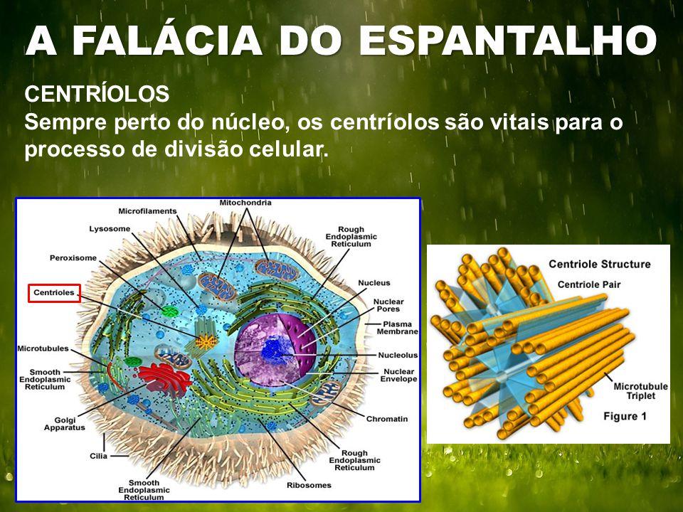 CENTRÍOLOS Sempre perto do núcleo, os centríolos são vitais para o processo de divisão celular. A FALÁCIA DO ESPANTALHO