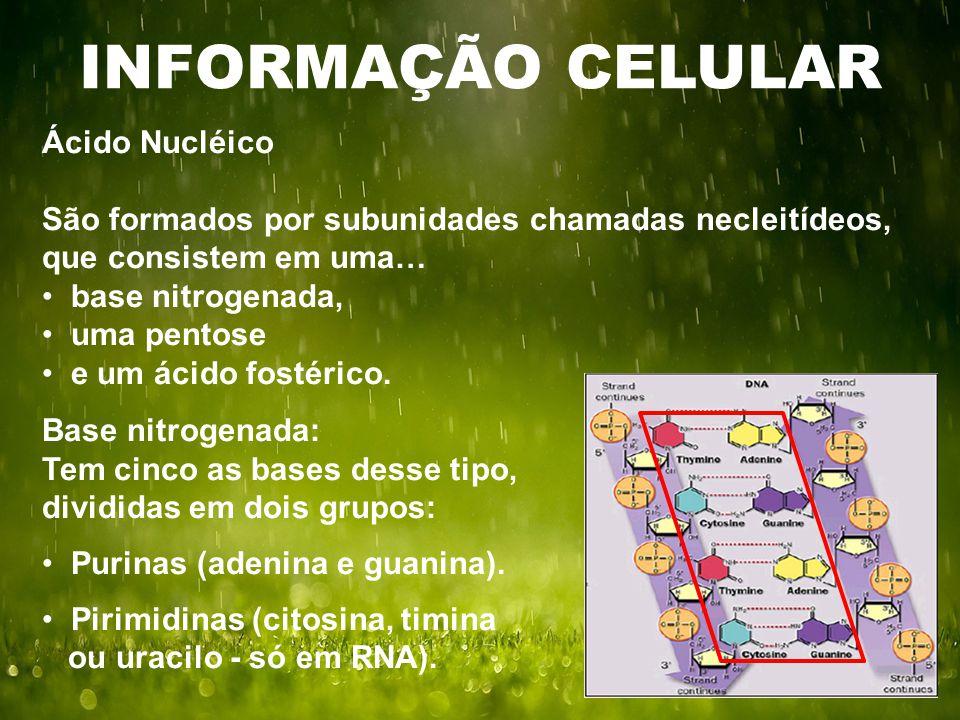 INFORMAÇÃO CELULAR Ácido Nucléico São formados por subunidades chamadas necleitídeos, que consistem em uma… base nitrogenada, uma pentose e um ácido fostérico.