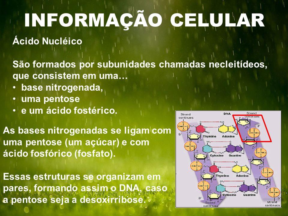 INFORMAÇÃO CELULAR Ácido Nucléico São formados por subunidades chamadas necleitídeos, que consistem em uma… base nitrogenada, uma pentose e um ácido f