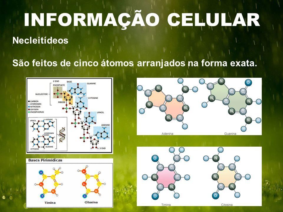 INFORMAÇÃO CELULAR Necleitídeos São feitos de cinco átomos arranjados na forma exata.