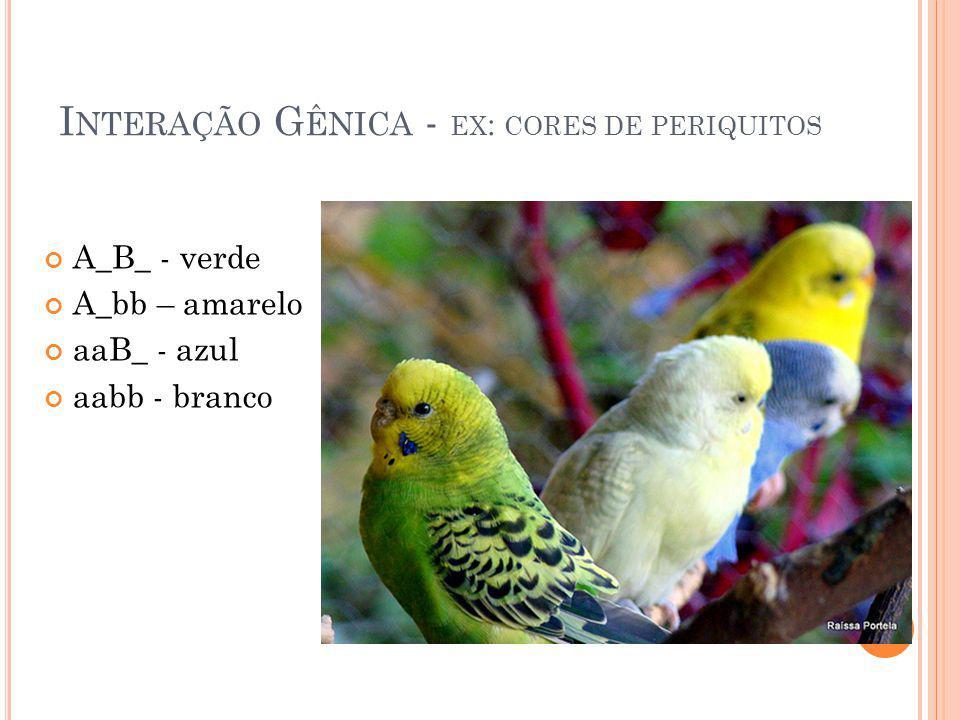 I NTERAÇÃO G ÊNICA - EX : CORES DE PERIQUITOS A_B_ - verde A_bb – amarelo aaB_ - azul aabb - branco