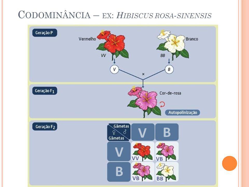 C ODOMINÂNCIA – EX : H IBISCUS ROSA - SINENSIS