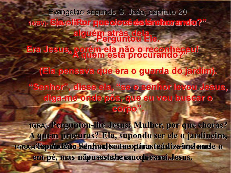 Evangelho segundo S.