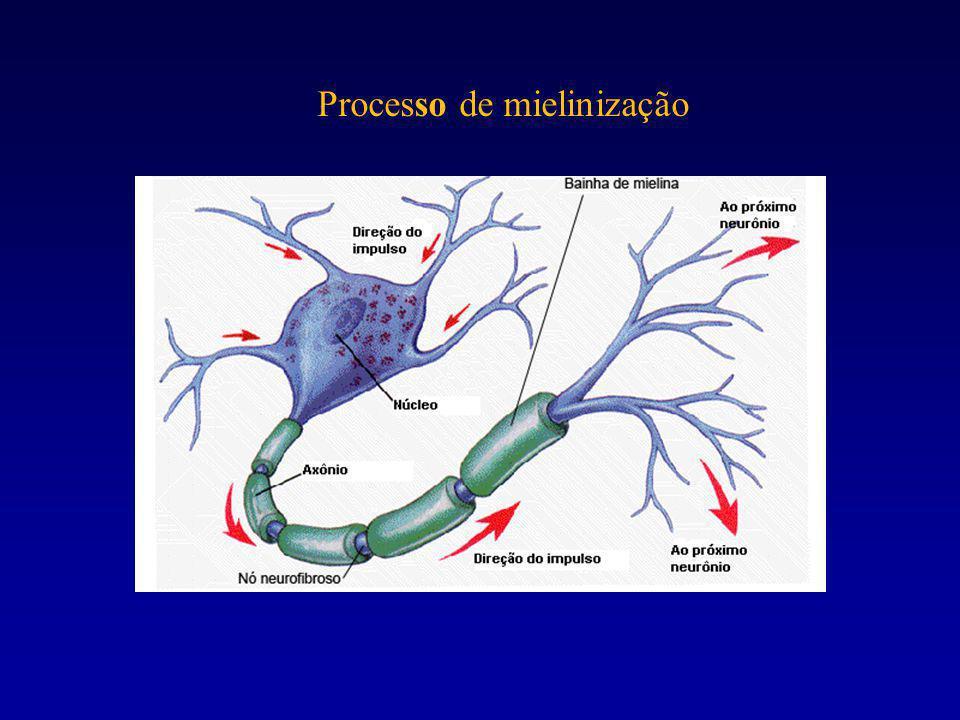 Processo de mielinização