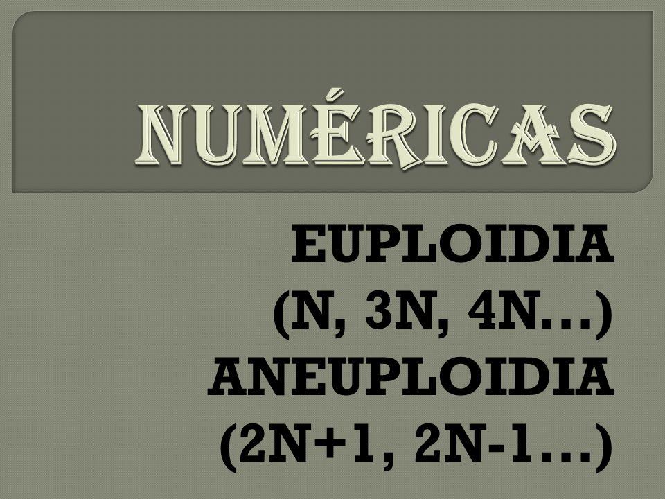 EUPLOIDIA (N, 3N, 4N...) ANEUPLOIDIA (2N+1, 2N-1...)