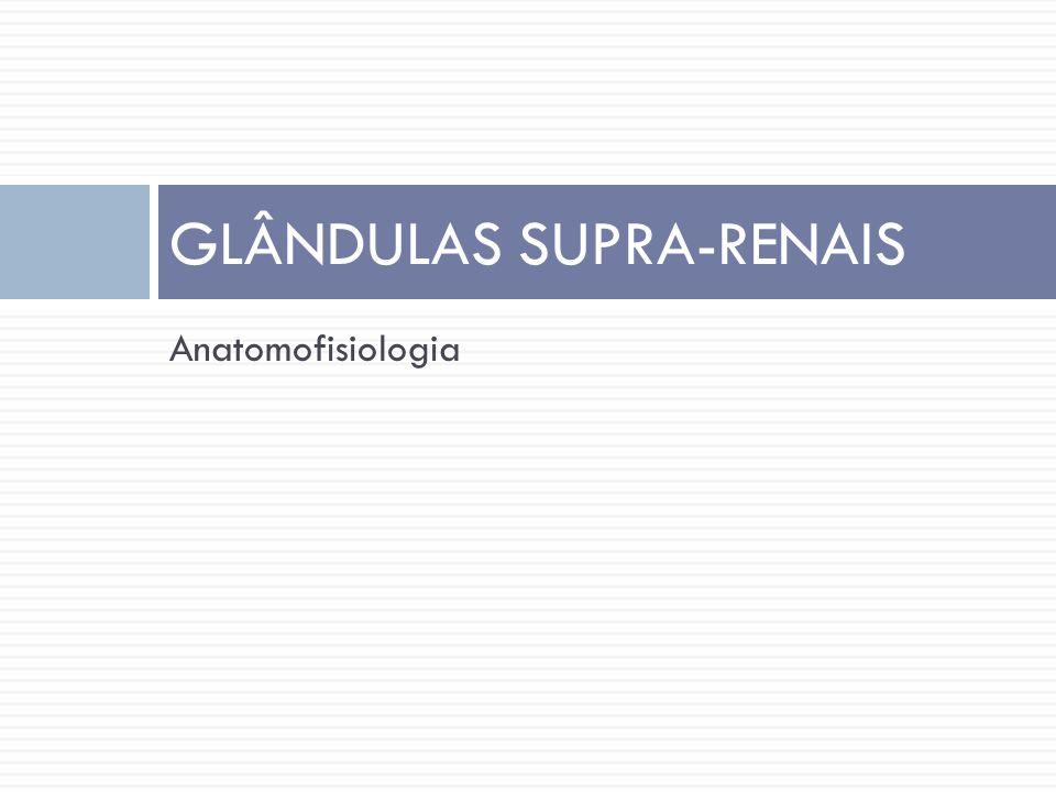 Supra-renais  São estruturas bilaterais situadas crânio-medialmente aos rins  Estão divididas em 2 zonas distintas:  Córtex  Medula