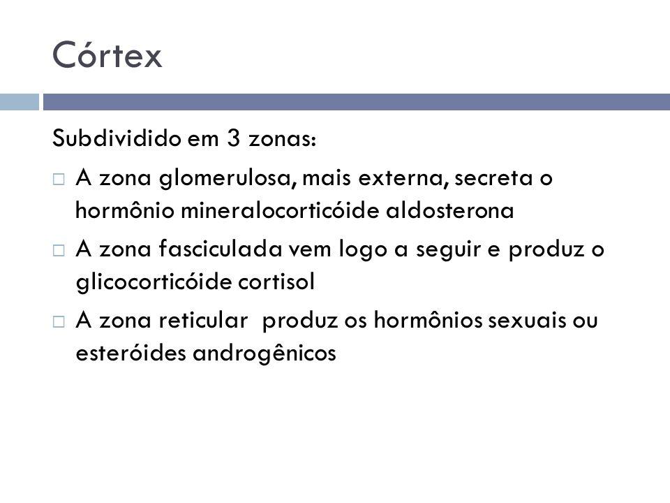 Córtex Subdividido em 3 zonas:  A zona glomerulosa, mais externa, secreta o hormônio mineralocorticóide aldosterona  A zona fasciculada vem logo a s
