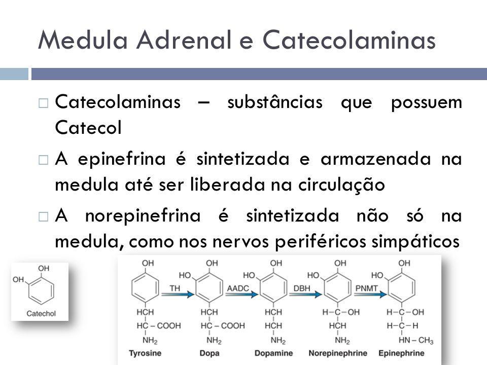  Catecolaminas – substâncias que possuem Catecol  A epinefrina é sintetizada e armazenada na medula até ser liberada na circulação  A norepinefrina