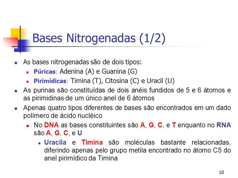 10 Bases Nitrogenadas (1/2) As bases nitrogenadas são de dois tipos: Púricas: Adenina (A) e Guanina (G) Pirimídicas: Timina (T), Citosina (C) e Uracil