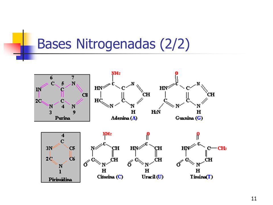 11 Bases Nitrogenadas (2/2)