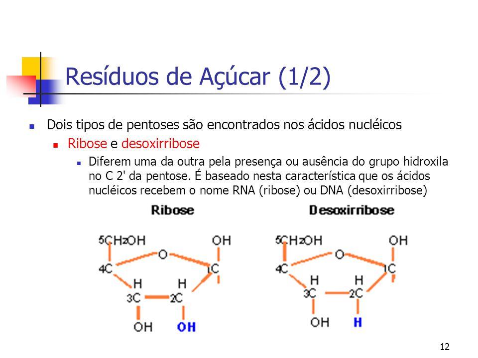 12 Resíduos de Açúcar (1/2) Dois tipos de pentoses são encontrados nos ácidos nucléicos Ribose e desoxirribose Diferem uma da outra pela presença ou a