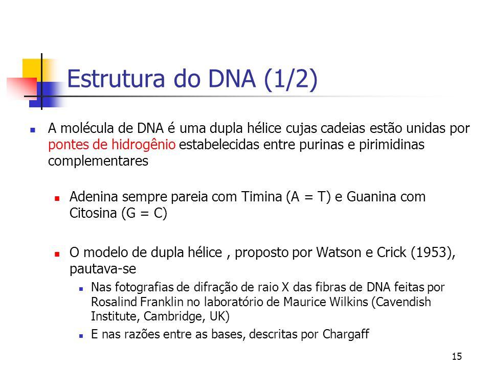 15 Estrutura do DNA (1/2) A molécula de DNA é uma dupla hélice cujas cadeias estão unidas por pontes de hidrogênio estabelecidas entre purinas e pirim