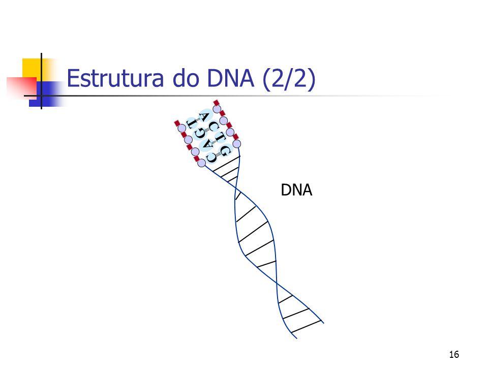 16 Estrutura do DNA (2/2) G C A T C G T A ||| || DNA