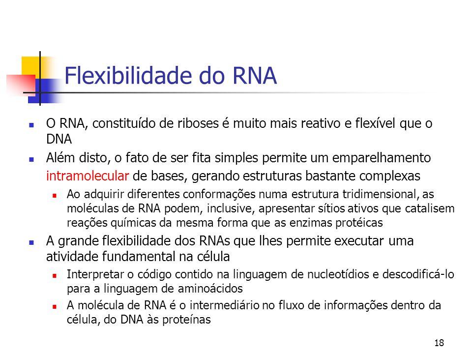 18 Flexibilidade do RNA O RNA, constituído de riboses é muito mais reativo e flexível que o DNA Além disto, o fato de ser fita simples permite um empa