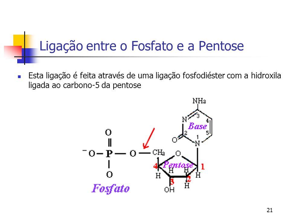 21 Ligação entre o Fosfato e a Pentose Esta ligação é feita através de uma ligação fosfodiéster com a hidroxila ligada ao carbono-5 da pentose