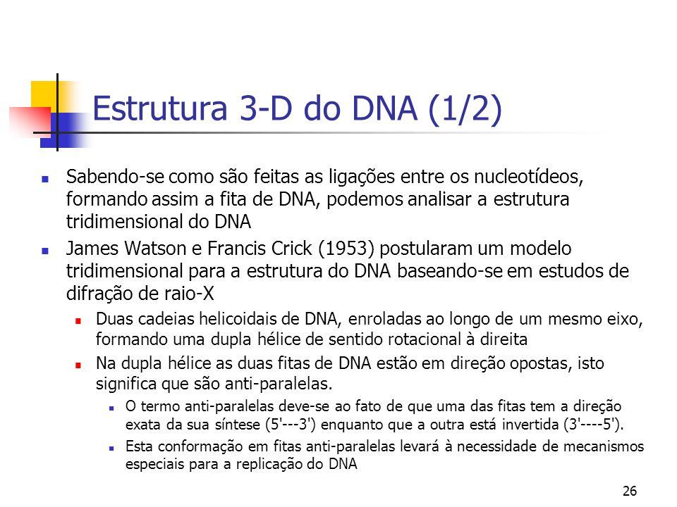 26 Estrutura 3-D do DNA (1/2) Sabendo-se como são feitas as ligações entre os nucleotídeos, formando assim a fita de DNA, podemos analisar a estrutura