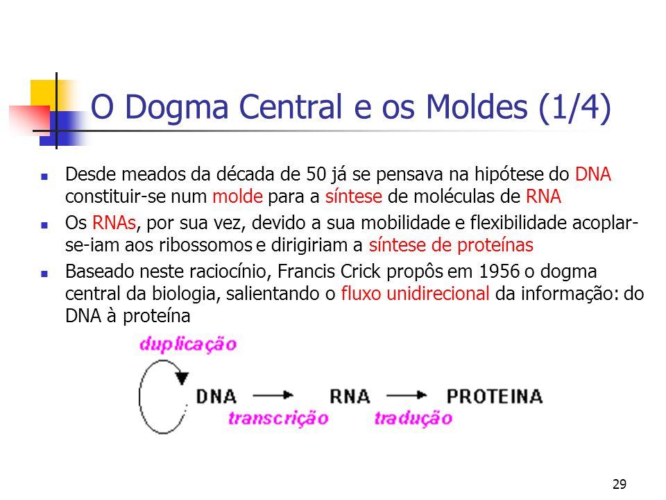29 O Dogma Central e os Moldes (1/4) Desde meados da década de 50 já se pensava na hipótese do DNA constituir-se num molde para a síntese de moléculas