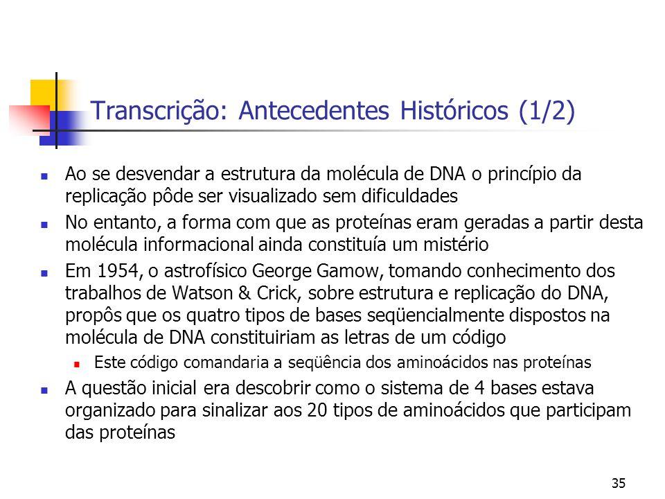 35 Transcrição: Antecedentes Históricos (1/2) Ao se desvendar a estrutura da molécula de DNA o princípio da replicação pôde ser visualizado sem dificu