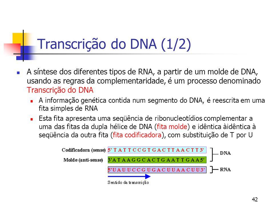 42 Transcrição do DNA (1/2) A síntese dos diferentes tipos de RNA, a partir de um molde de DNA, usando as regras da complementaridade, é um processo d