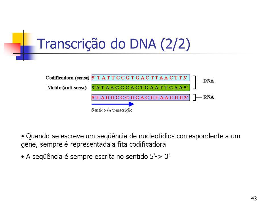 43 Transcrição do DNA (2/2) Quando se escreve um seqüência de nucleotídios correspondente a um gene, sempre é representada a fita codificadora A seqüê
