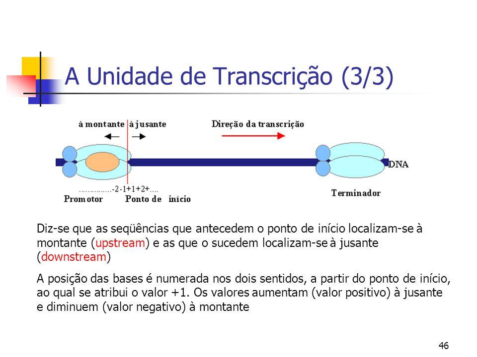 46 A Unidade de Transcrição (3/3) Diz-se que as seqüências que antecedem o ponto de início localizam-se à montante (upstream) e as que o sucedem local