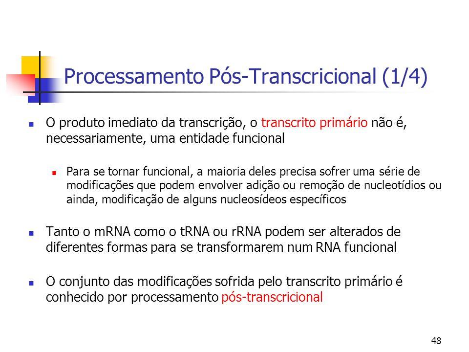 48 Processamento Pós-Transcricional (1/4) O produto imediato da transcrição, o transcrito primário não é, necessariamente, uma entidade funcional Para