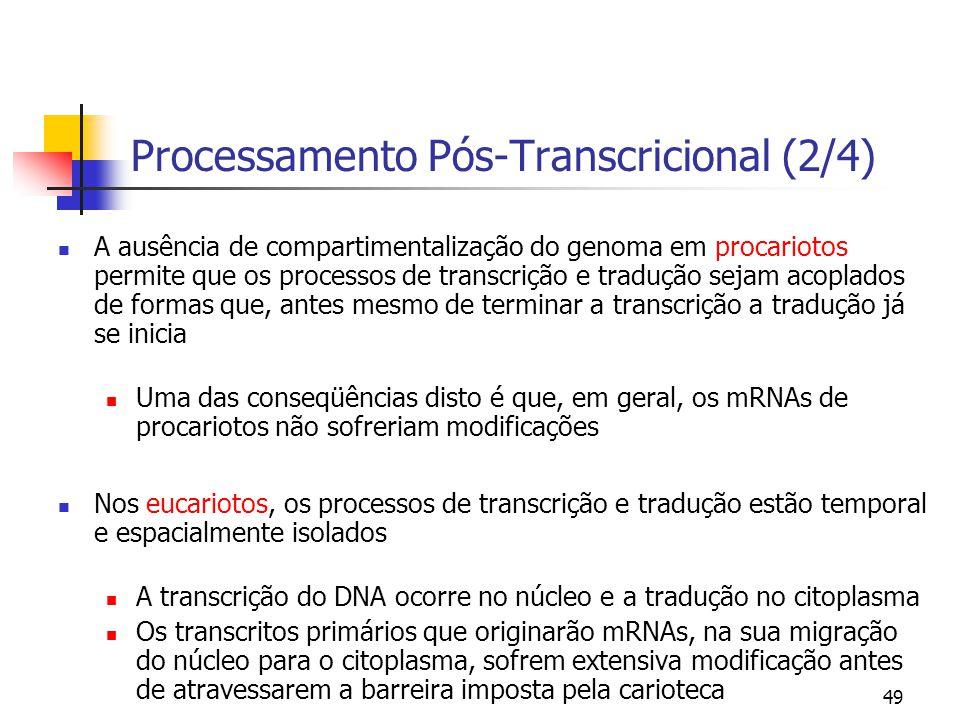 49 Processamento Pós-Transcricional (2/4) A ausência de compartimentalização do genoma em procariotos permite que os processos de transcrição e traduç