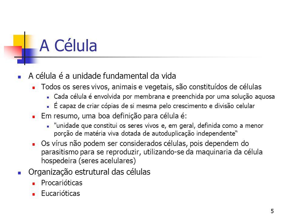 5 A Célula A célula é a unidade fundamental da vida Todos os seres vivos, animais e vegetais, são constituídos de células Cada célula é envolvida por