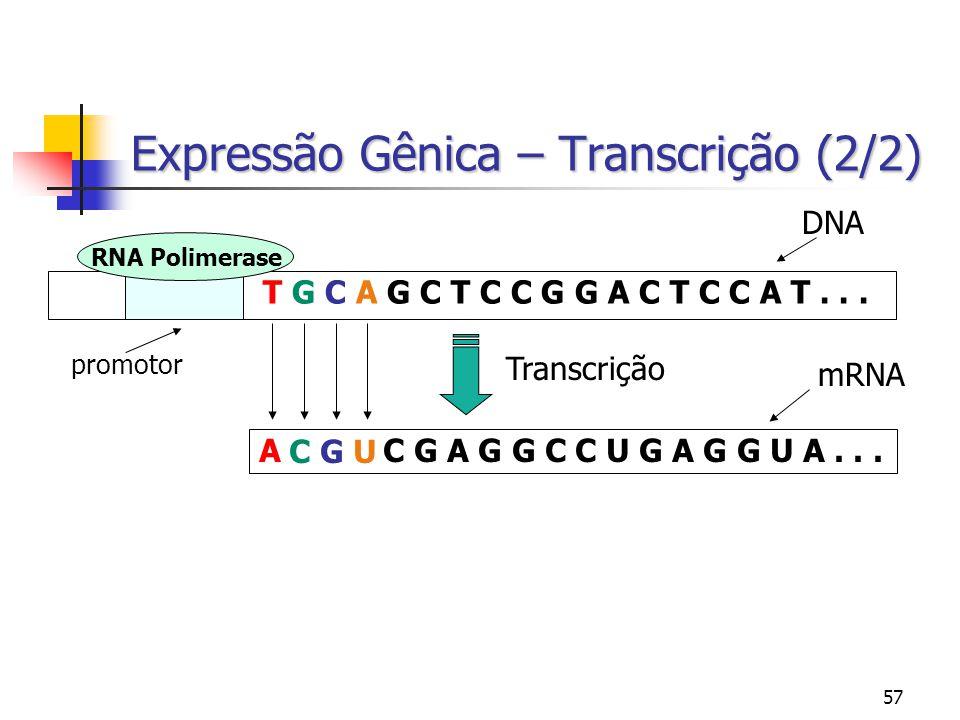 57 Expressão Gênica – Transcrição (2/2) T G C A G C T C C G G A C T C C A T... RNA Polimerase promotor Transcrição A C G A G G C C U G A G G U A... DN