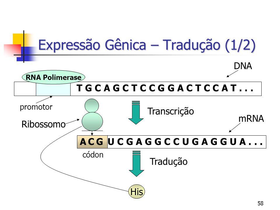 58 Expressão Gênica – Tradução (1/2) T G C A G C T C C G G A C T C C A T... RNA Polimerase promotor Transcrição A C G U C G A G G C C U G A G G U A...