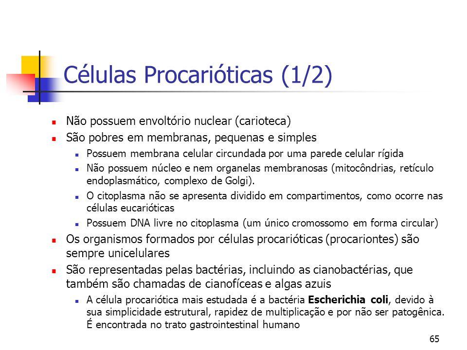 65 Células Procarióticas (1/2) Não possuem envoltório nuclear (carioteca) São pobres em membranas, pequenas e simples Possuem membrana celular circund